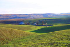 Lovely Meadows at Walla Walla royalty free stock photo