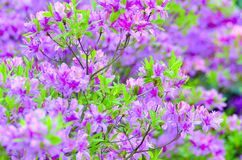 Mix of lovely flowers spring to sumer. A lovely mix ac spring, summer and autumn flowers, season of love Stock Images