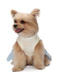 Lovely Mixed Breed Dog Royalty Free Stock Photo