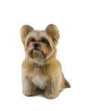 Lovely Mixed Breed Dog Stock Photos