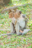Lovely Monkey  Long-Tailed Macaque  friends Stock Photography