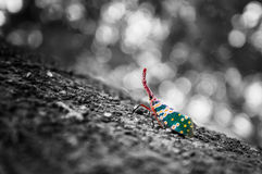 Lovely moon bug white and black and colourful Royalty Free Stock Images
