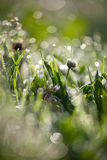 Lovely morning dew Royalty Free Stock Images