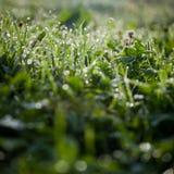 Lovely morning dew Stock Images