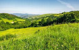 Lovely mountainous countryside in summertime. Grassy hillside near the forest. mountain ridge with high peak far in the distance stock photo