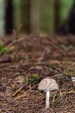 Lovely Mushroom Kingdom Stock Images