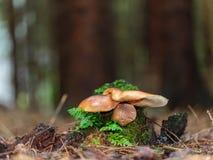 Lovely Mushroom Kingdom Royalty Free Stock Images