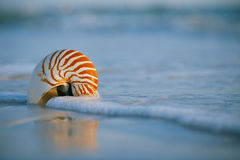 Lovely nautilus shell on a still sea ocean beach  and reflection Royalty Free Stock Photo