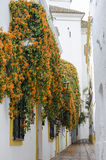 Orange blossoms on white Royalty Free Stock Image