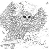 Lovely owl coloring page Royalty Free Stock Photography