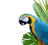 Lovely parrot Stock Images