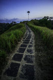 Lovely path. Balinesian pad field path near Ubud Stock Photos