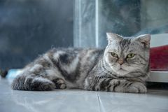 A lovely pet cat lying at home stock images
