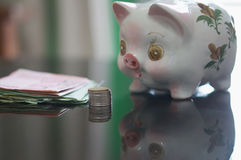 Lovely piggy bank is looking money Stock Photography