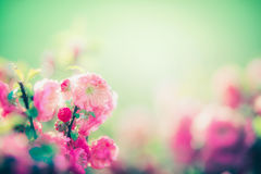 Lovely pink blossom at green nature background in garden or park, outdoor Royalty Free Stock Images