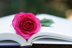 Lovely pink color rose on book, soft color tone, sweet valentine presentation concept. Copy space royalty free stock photo