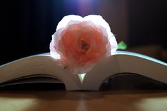 Lovely pink color rose on book stock images
