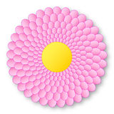 Lovely pink flowerer with yellow center and with shadow on white background Stock Photo