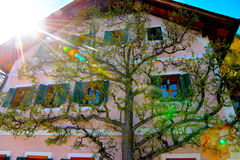 A lovely pink house. With a tree against the wall in Hallstat, Austria Royalty Free Stock Image