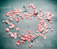 Lovely pink pastel petals of flowers on  turquoise rustic background,  flat lay, top view, frame. Lovely pink pastel petals of flowers on  turquoise rustic Stock Photography