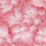 Lovely pink pattern with gladiolus heads. Original texture. Stock Illustration