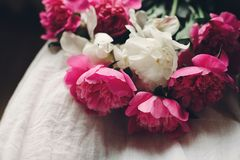 Lovely pink peonies on legs of boho girl in white bohemian dress, top view. space for text. stylish hipster woman sitting with. Beautiful flowers in morning stock image