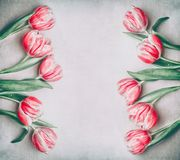 Lovely pink red tulips frame with copy space, flat lay. Stock Photo