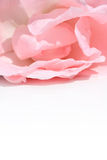 Lovely pink rose petals closeup Royalty Free Stock Images