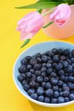 Lovely pink tulips and blueberries Stock Photos