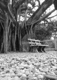 Lovely place in sri lanka royalty free stock photos