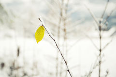 Lovely plant with yellow leaf covered with snow Royalty Free Stock Photography