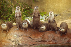 Lovely playful otters in symmetrical stand Stock Image