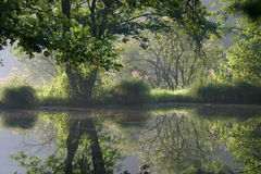 Lovely pond. In the morning Stock Image