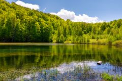 Lovely pond in the forest on a hillside. Serene day in springtime outdoors Stock Photography