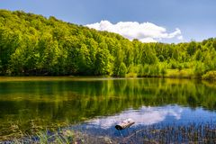 Lovely pond in the forest on a hillside. Serene day in springtime outdoors Stock Image