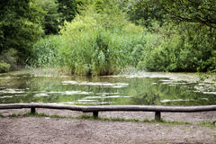 Park Pond. A lovely pond located at Gorlitzer park, Berlin, Germany Royalty Free Stock Image