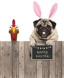 Lovely pug dog with easter bunny ears diadem and chicken, with sign saying happy easter stock photography