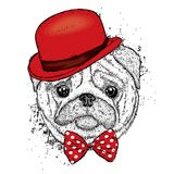 Lovely pug hat and with a tie. Funny dog. Puppy. Vector illustration for a postcard or a poster. Print on clothes Stock Photo