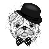 Lovely pug hat and with a tie. Funny dog. Puppy. Vector illustration for a postcard or a poster. Print on clothes Stock Images