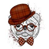 Lovely pug hat and with a tie. Funny dog. Puppy. Vector illustration for a postcard or a poster. Print on clothes Stock Photos