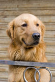 Lovely puppy. With   brown hair and bright eyes watching,stands asides steel handrail Stock Photography