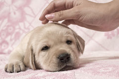 Lovely puppy Stock Images