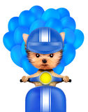 Lovely puppy sitting on motorbike with balloons Stock Photos