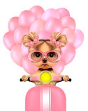 Lovely puppy sitting on motorbike with balloons Royalty Free Stock Image