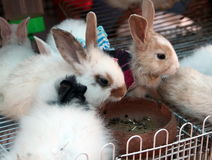 Lovely Rabbit Stock Images