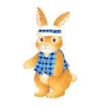 Lovely rabbit Stock Image