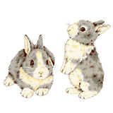 Lovely rabbit. I made the illustration of the rabbit which I loved Royalty Free Stock Photos
