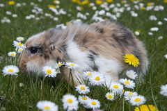 Lovely rabbit Stock Photography
