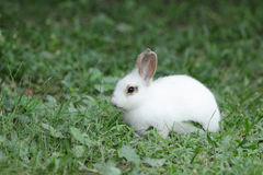 Lovely rabbits Royalty Free Stock Photography