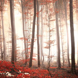 Lovely red colored autumn season beech forest Royalty Free Stock Photography